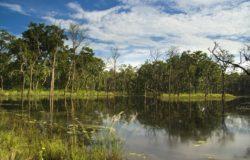 Chitwan - forest