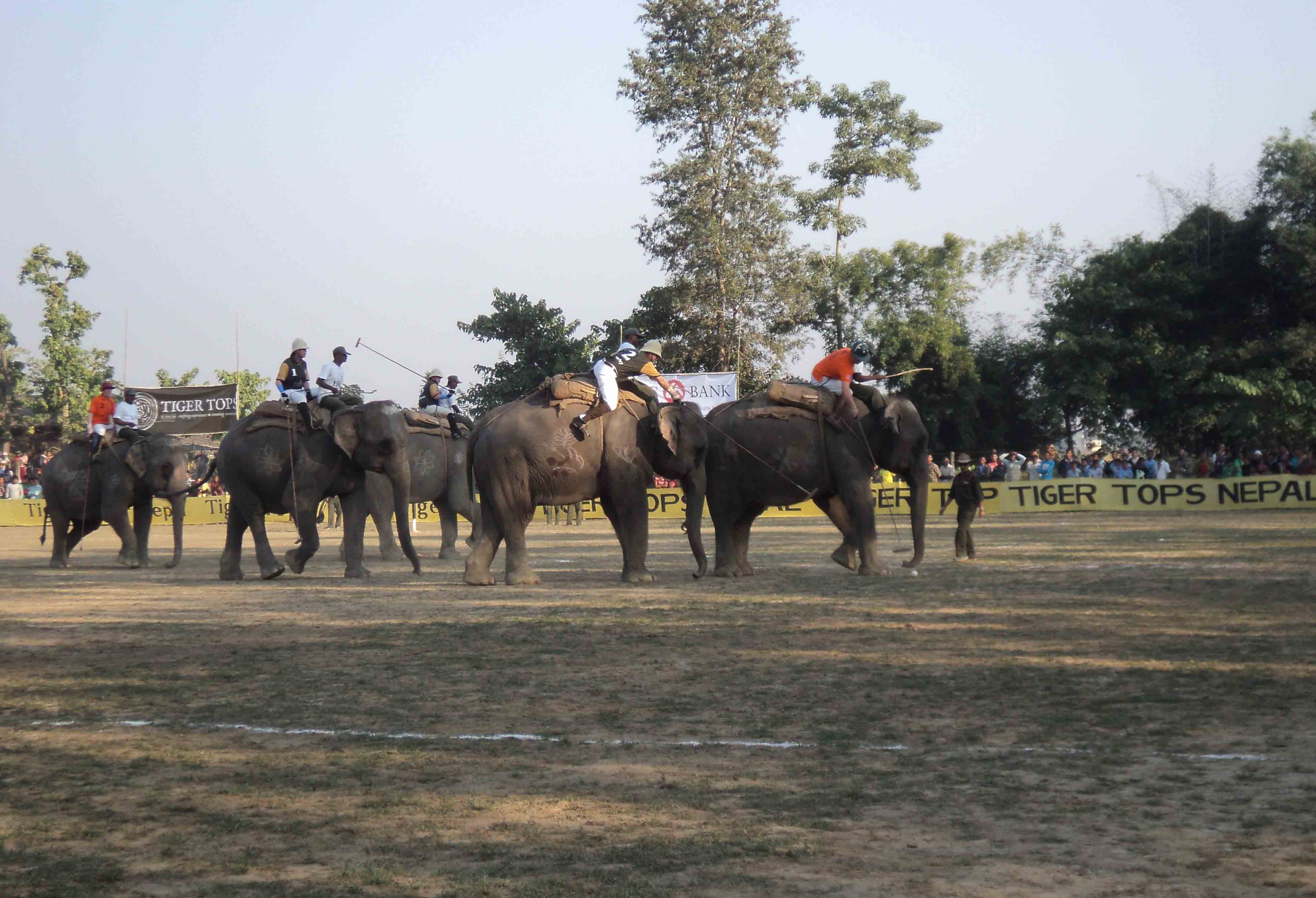 Elephant Breeding Center - Elephant race